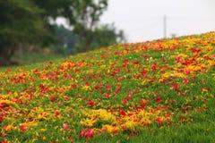 Pedal von Blumen über der grünen Rasenfläche Stockfotos