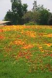 Pedal von Blumen über der grünen Rasenfläche Lizenzfreie Stockbilder