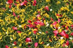 Pedal von Blumen über der grünen Rasenfläche Stockfotografie
