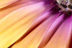 Pedales del arco iris Fotos de archivo libres de regalías