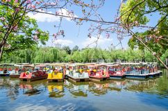 Pedalo boats parking in Green Lake Park ,it also known as Cui Hu Park is one of the most beautiful parks in Kunming city. Royalty Free Stock Image