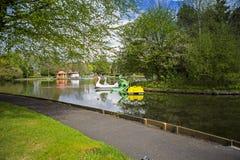 Pedalos da cisne em um lago do esporte de barco Imagem de Stock