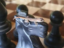 Pedazo ascendente cercano del caballo del ajedrez foto de archivo libre de regalías