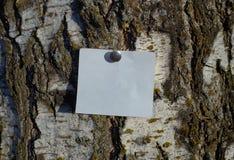 Pedazo blanco en blanco de papel de nota sujetado por el perno al árbol de corteza foto de archivo