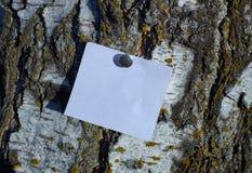 Pedazo blanco en blanco de papel de nota sujetado por el perno al árbol de corteza foto de archivo libre de regalías