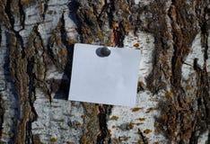 Pedazo blanco en blanco de papel de nota sujetado por el perno al árbol de corteza imagenes de archivo