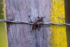 Pedazo de alambre de púas clavado a un poste de madera fotografía de archivo libre de regalías