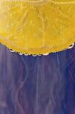 Pedazo de limón Fotografía de archivo libre de regalías