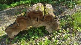 Pedazo de madera Imagen de archivo