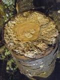 Pedazo de madera del árbol forestal de las virutas de madera con zonas muertas afuera fotografía de archivo libre de regalías