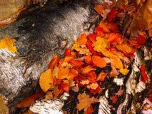 Pedazo de madera en bosque con las hojas Imagen de archivo