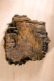 Pedazo de madera marchitada Imagen de archivo libre de regalías