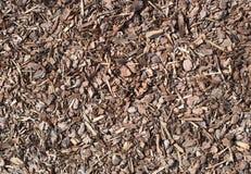 Pedazo de madera mojado fresco del árbol de pino, textura de la naturaleza Imagen de archivo libre de regalías