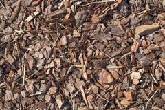 Pedazo de madera mojado fresco del árbol de pino, textura de la naturaleza Foto de archivo libre de regalías
