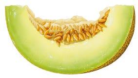 Pedazo de melón Imagenes de archivo