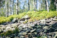 Pedazo de naturaleza salvaje con el arbusto, piedras y primer del abedul Fotos de archivo