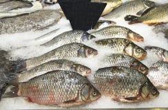 Pedazo de pescados crudos Foto de archivo libre de regalías