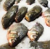 Pedazo de pescados crudos Imágenes de archivo libres de regalías