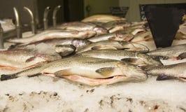 Pedazo de pescados crudos Fotografía de archivo libre de regalías