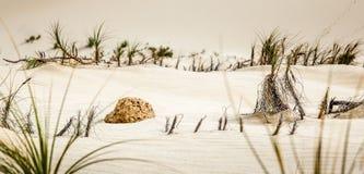 Pedazo de roca en las dunas de arena Fotos de archivo libres de regalías