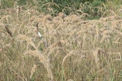 Pedazo de tallo del abedul en el campo de los matorrales espesos del alto Imágenes de archivo libres de regalías