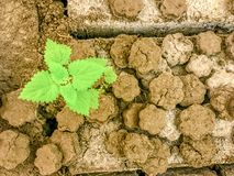 Pedazo de tierra agrietada con los leavs verdes fotos de archivo