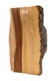 Pedazo de tronco Imagen de archivo libre de regalías