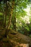 Pedazo del bosque Fotografía de archivo libre de regalías