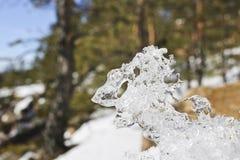 Pedazo figurado de hielo en el fondo borroso del bosque principal imagen de archivo