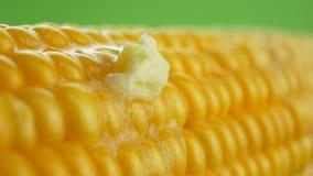 Pedazo fresco sabroso de mantequilla que derrite en maíz fresco amarillo maduro en mazorcas almacen de metraje de vídeo