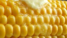 Pedazo fresco sabroso de mantequilla que derrite en maíz fresco amarillo maduro en mazorcas almacen de video