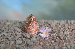 Pedazo pulido de jaspe rojo con la flor de Lithops Imágenes de archivo libres de regalías