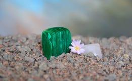 Pedazo pulido de la malaquita con la flor de Lithops Imagenes de archivo