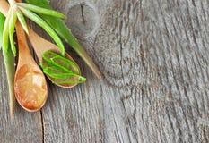 Pedazos de áloe vera Hierba útil para el cuidado y el cuidado del cabello de piel fotos de archivo libres de regalías