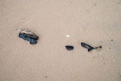 Pedazos de madera en la playa mojada Fotos de archivo