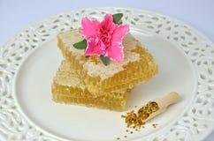 Pedazos de panal, de polen y de flor Fotografía de archivo