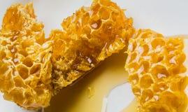Pedazos del primer de panal con la miel Imagen de archivo