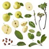 Pedazos enteros y hojas de la manzana verde fijadas aislados en el backgr blanco imagen de archivo