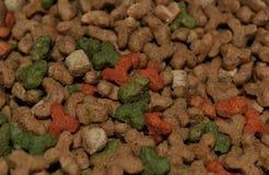 Pedazos frescos de la comida para gatos Fotos de archivo libres de regalías