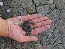 Pedazos secos de arcilla agrietada en la palma masculina Cla agrietado seco Foto de archivo libre de regalías