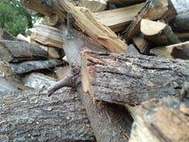 Pedazos y tactos de la madera apilados fotos de archivo
