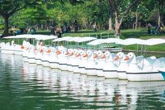 Peddels die in het meer worden geparkeerd stock afbeeldingen