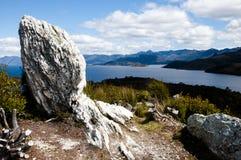 Pedder sjö - Tasmanien Fotografering för Bildbyråer