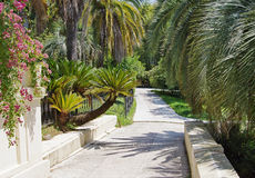 Pedestrian alley for walking in the Sochi Arboretum Royalty Free Stock Photography