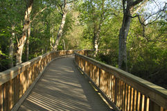 Pedestrian bridge in forest Stock Photos