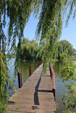 Pedestrian bridge to a green island in the middle of the lake 1. The picture was taken in Ukraine, in Gaivoronsky district. In the picture, a footbridge on a royalty free stock photo
