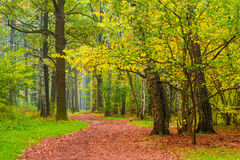 Pedestrian path in autumn park royalty free stock photos