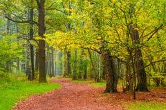 Pedestrian path in autumn   park Royalty Free Stock Photos