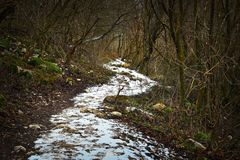 Pedestrian path in the forest, winter scene Royalty Free Stock Photos