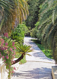 Pedestrian path going among palm trees in the Sochi Arboretum. In the Sochi Arboretum. Pedestrian path going among palm trees Stock Photos